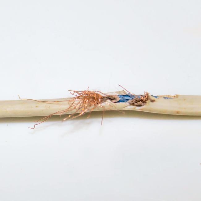Traas Building Care knaagschade kabels