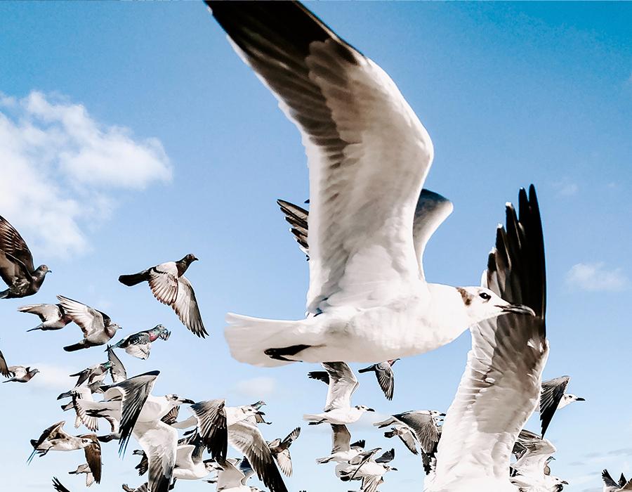 Traas Building Care vogeloverlast